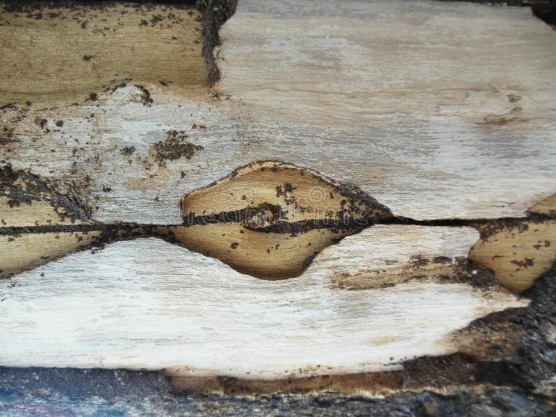Abstracts Wooden Form royalty free stock image