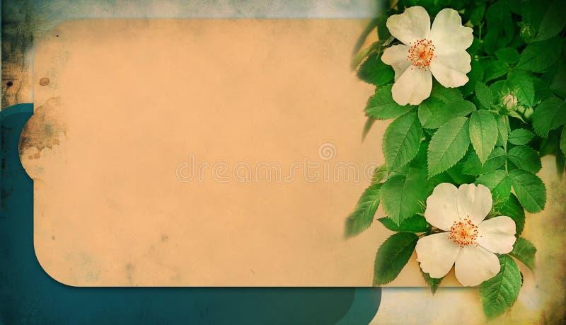 Abstraia o fundo com rosas fotografia de stock royalty free