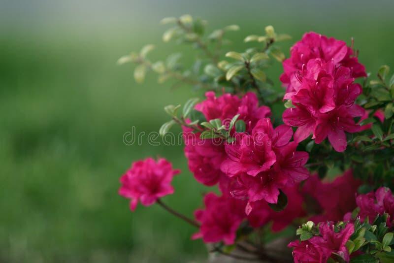 Abstraia o fundo floral fotos de stock royalty free