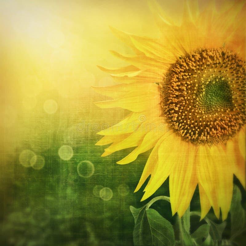 Abstraia o fundo floral com girassol imagem de stock