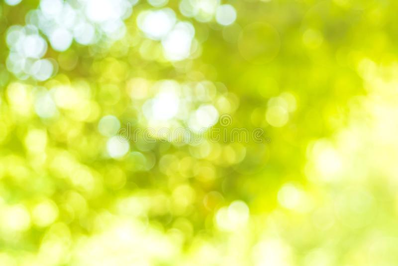 abstraiga el fondo Fondo verde de la naturaleza con el bokeh y el ligh foto de archivo libre de regalías