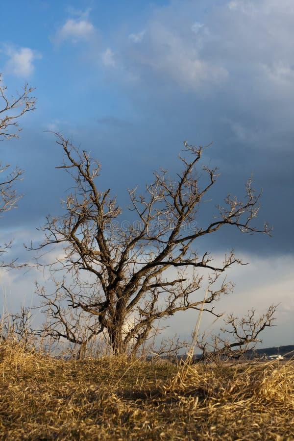 Abstrait d'un seul arbre photographie stock libre de droits