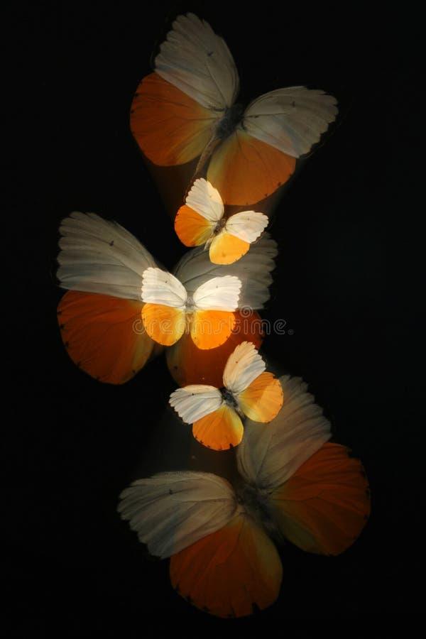 Abstrait des guindineaux avec le zoom image stock