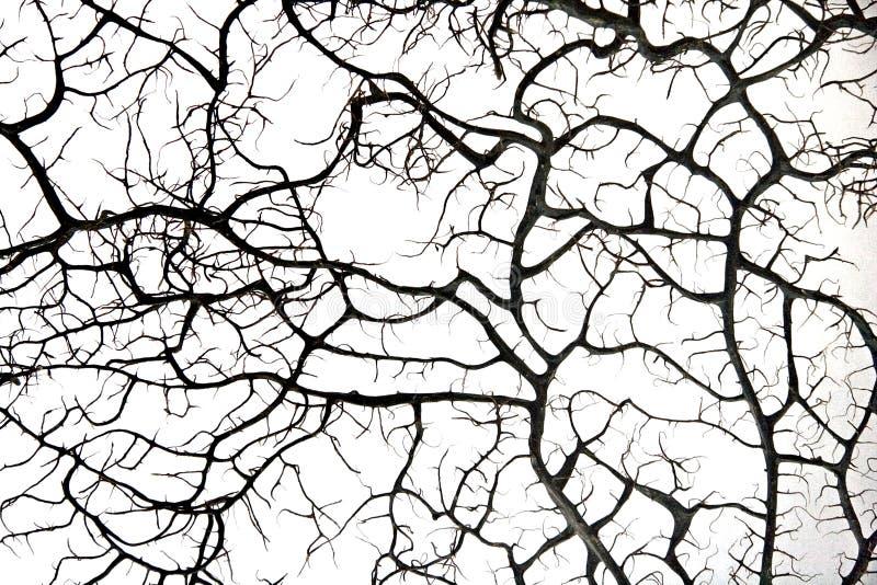 Download Abstrakcja naturalna zdjęcie stock. Obraz złożonej z barcelona - 13329796
