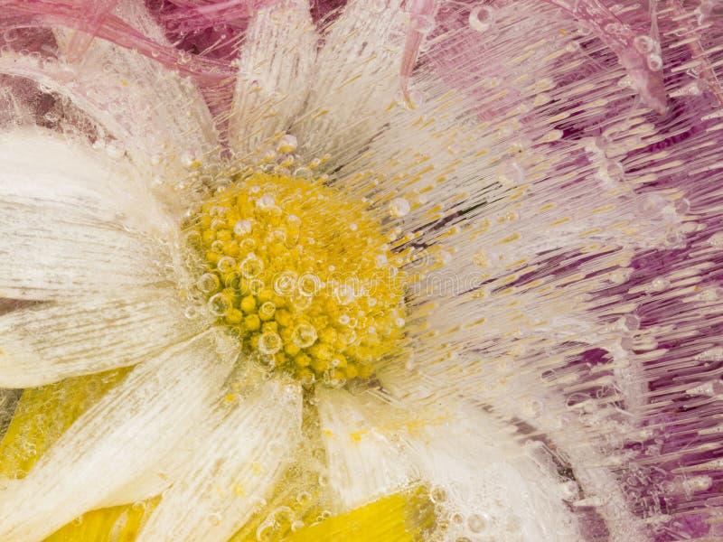 Abstrakcja z chamomile kwiatami zdjęcie stock
