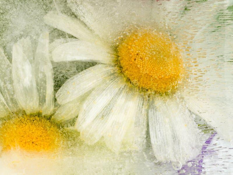 Abstrakcja z chamomile kwiatami obrazy royalty free