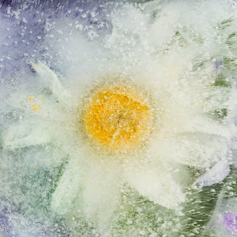 Abstrakcja z chamomile kwiatem obrazy royalty free