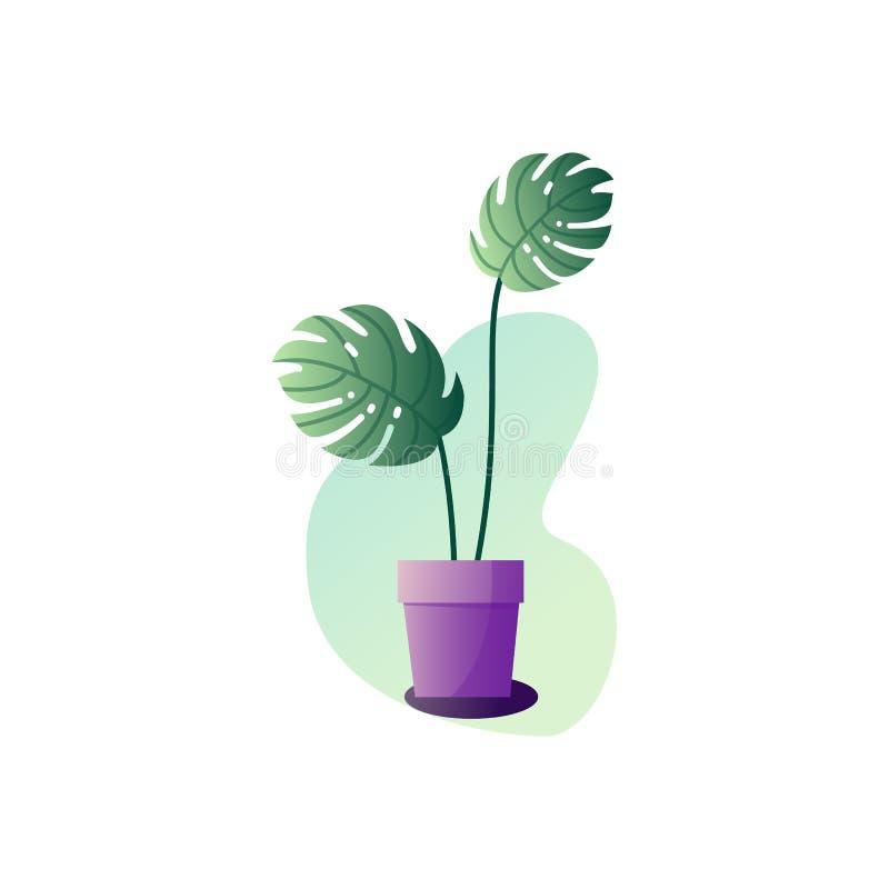 Abstrakcji monstera puszkująca roślina Wektorowa ilustracja liście houseplant ilustracja wektor