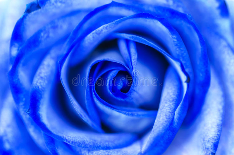 Abstrakcjonistyczna błękit róża obraz stock