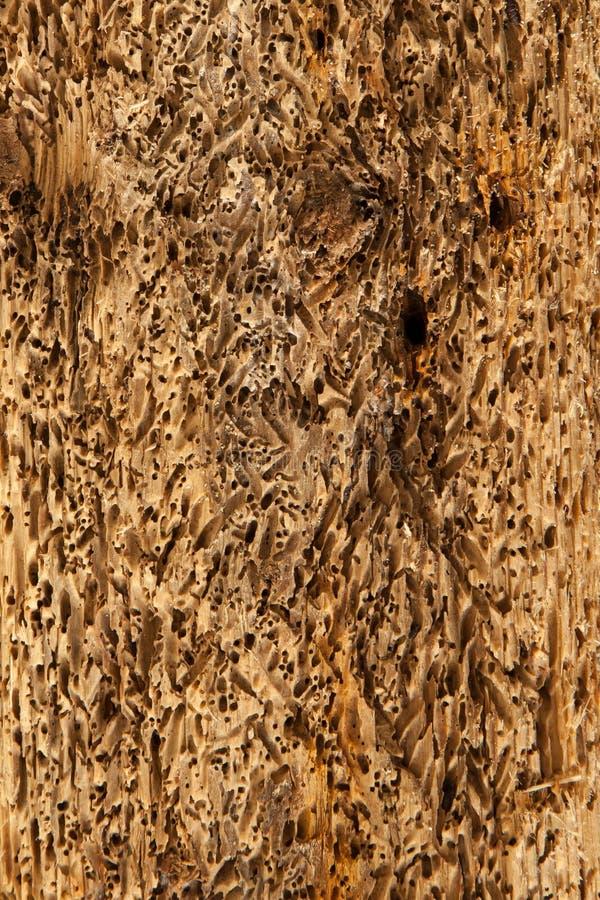 Abstrakcjonistyczna Driftwood tła tekstura - będąca ubranym, obijający, naturalny zdjęcia stock
