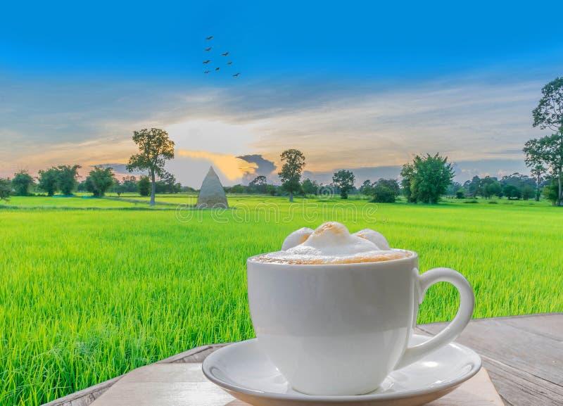 Abstrakcjonistyczna filiżanka latte kawa z sylwetka zmierzchem, zielonym irlandczyków ryż polem pięknym niebem i chmurą, zdjęcia royalty free
