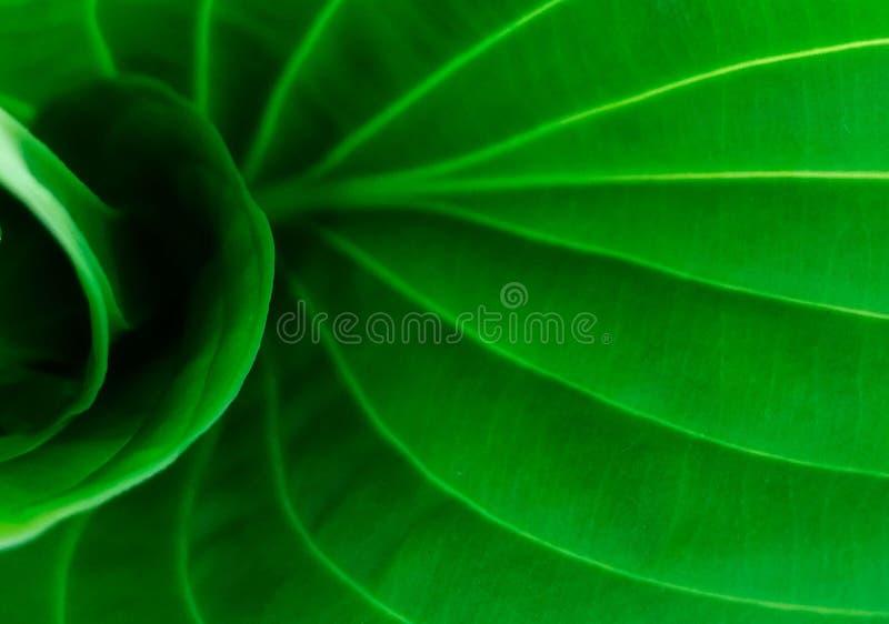 Abstrakcjonistyczna liść roślina zdjęcie stock