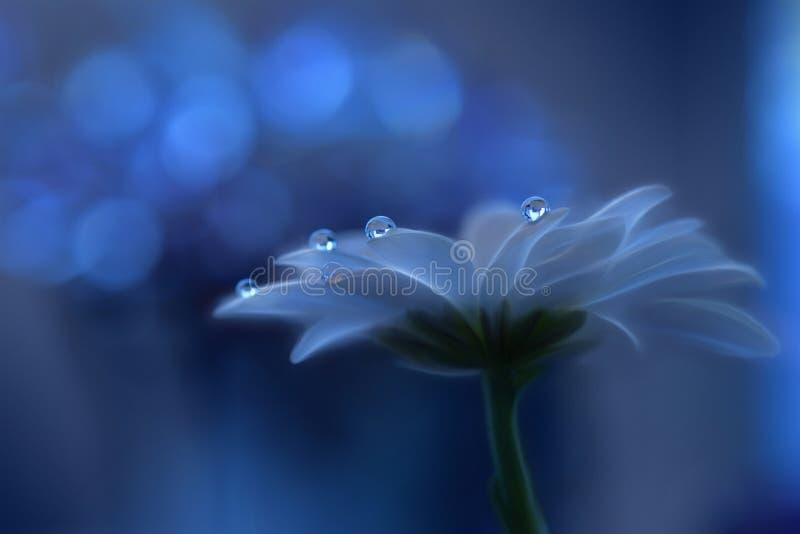 Abstrakcjonistyczna makro- fotografia z wodnymi kroplami Artystyczny tło dla desktop Magiczna Artystyczna Błękitna tapeta Kwiaty  obraz stock