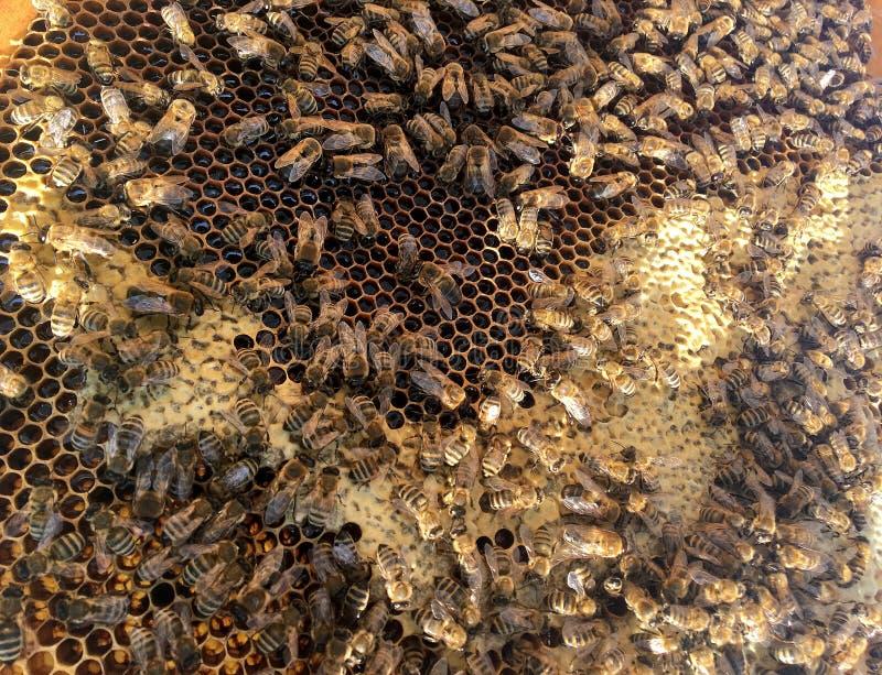 Abstrakcjonistyczna sześciokąt struktura jest honeycomb od pszczoła roju wypełniającego z złotym miodem zdjęcie stock