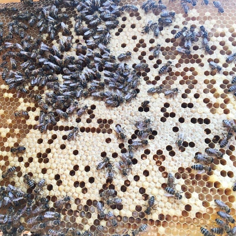 Abstrakcjonistyczna sześciokąt struktura jest honeycomb od pszczoła roju wypełniającego z złotym miodem obrazy stock