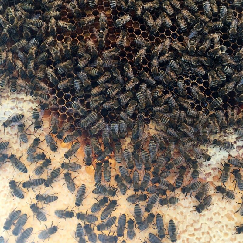 Abstrakcjonistyczna sześciokąt struktura jest honeycomb od pszczoła roju wypełniającego z złotym miodem fotografia royalty free