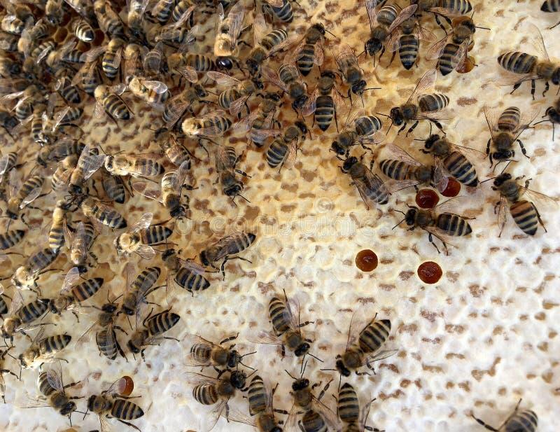 Abstrakcjonistyczna sześciokąt struktura jest honeycomb od pszczoła roju wypełniającego z złotym miodem obraz stock