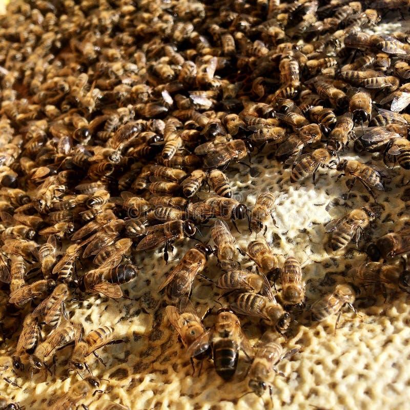 Abstrakcjonistyczna sześciokąt struktura jest honeycomb od pszczoła roju wypełniającego z złotym miodem obrazy royalty free