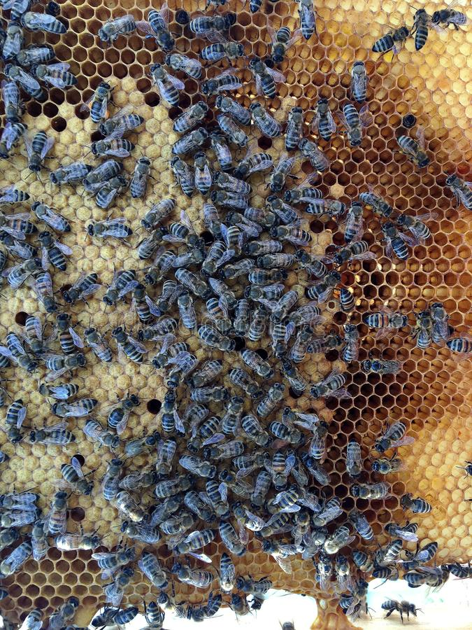 Abstrakcjonistyczna sześciokąt struktura jest honeycomb od pszczoła roju wypełniającego z złotym miodem zdjęcia royalty free