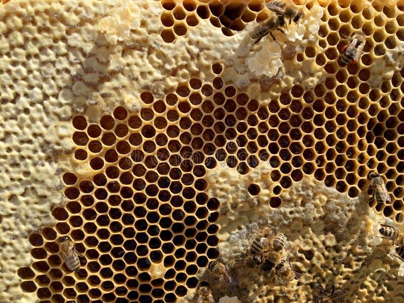 Abstrakcjonistyczna sześciokąt struktura jest honeycomb od pszczoła roju wypełniającego z złotym miodem zdjęcia stock