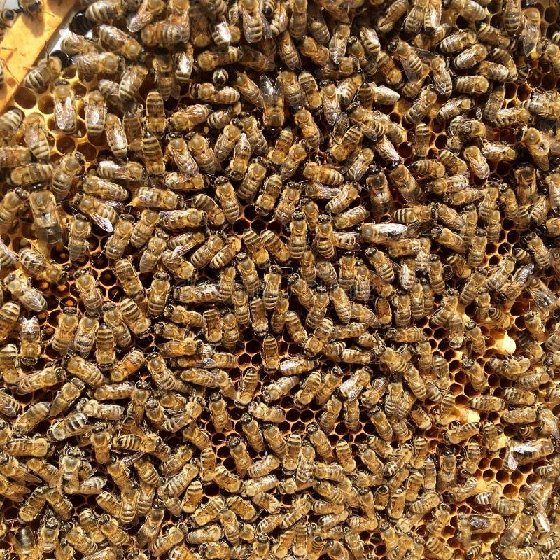 Abstrakcjonistyczna sześciokąt struktura jest honeycomb od pszczoła roju wypełniającego z złotym miodem fotografia stock