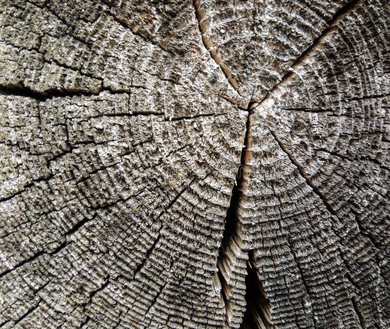 Abstrakcjonistyczna tło tekstura drewno zdjęcie royalty free