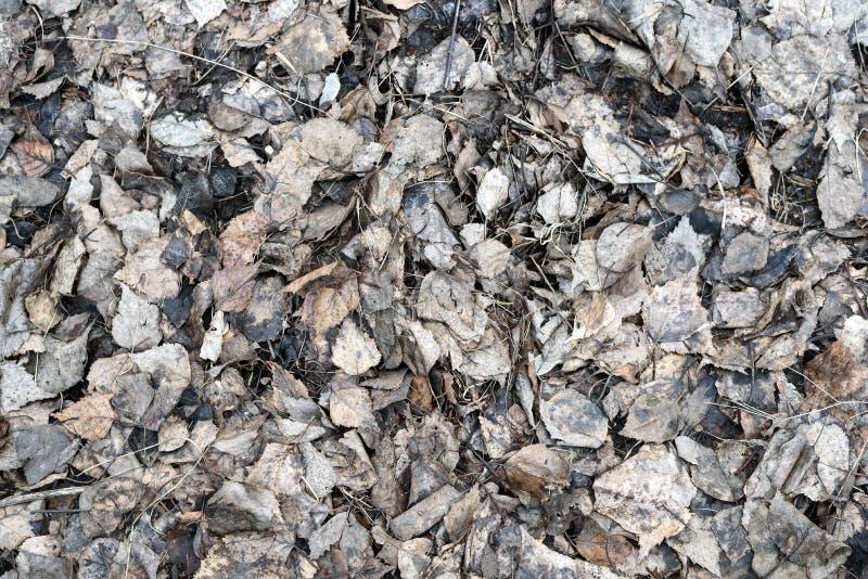 Abstrakcjonistyczna tekstura susi spadać liście brzoza obrazy stock