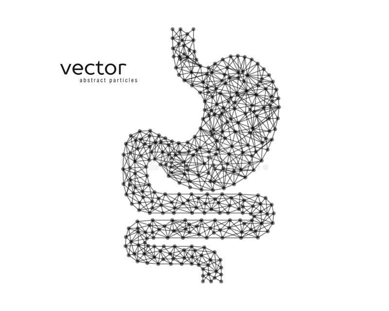 Abstrakcjonistyczna wektorowa ilustracja ludzki żołądek ilustracji