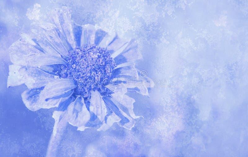 abstrakcjonistyczne antykwarskie kwiatu wizerunku cynie zdjęcia stock