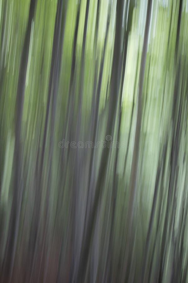 Abstrakcjonistyczne drzewne fotografie zdjęcie royalty free