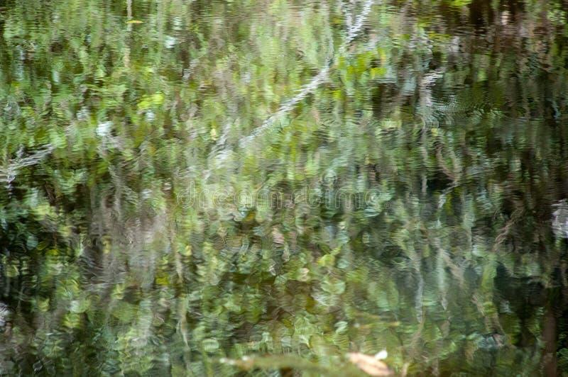 Abstrakcjonistycznej odbicie zieleni Flores jeziorny artystyczny tło zdjęcia royalty free