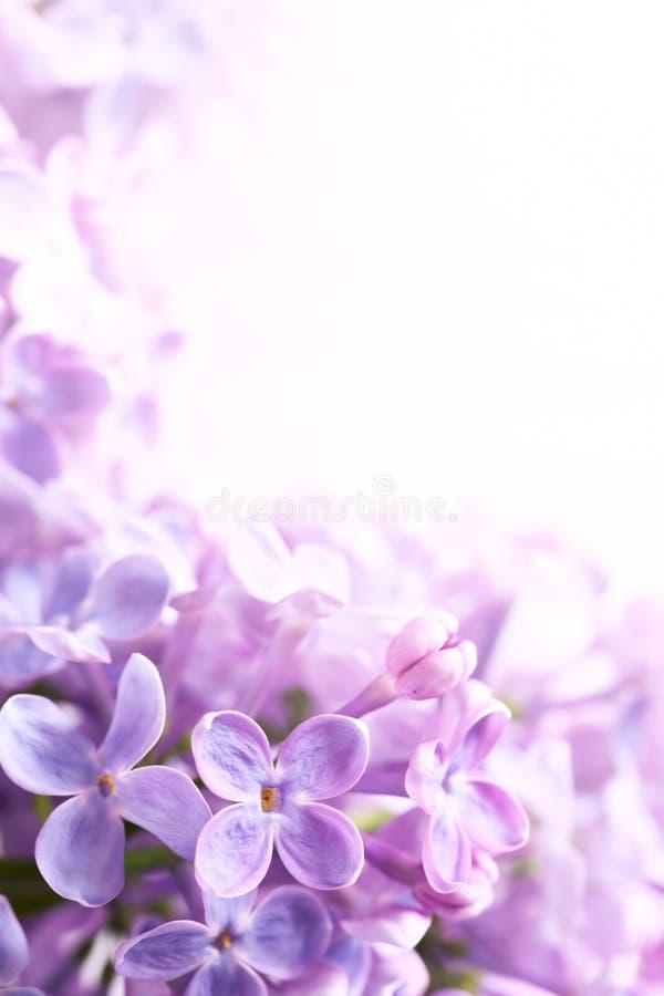 abstrakcjonistycznej sztuki tła bzu wiosna zdjęcie stock