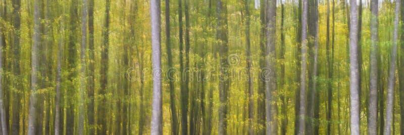 Abstrakcjonistyczni drzewa w wysokiej górze obraz stock