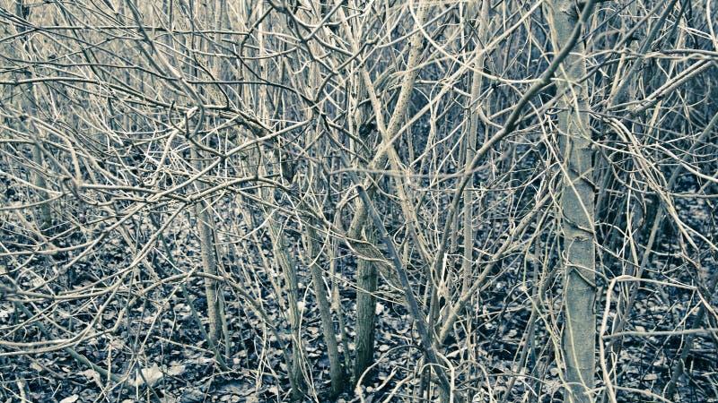 abstrakcjonistyczni krzaki fotografia royalty free