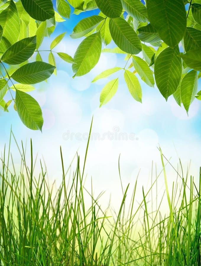 Abstrakcjonistyczni naturalni tła z zieloną trawą zdjęcia royalty free