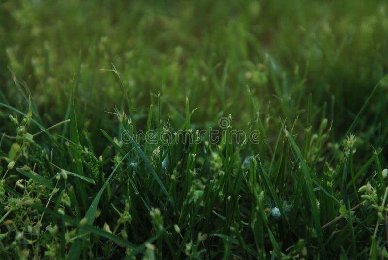 Abstrakcjonistyczni Naturalni Zielonej trawy tła w lasu parka Plenerowy Naturalnym zdjęcie stock