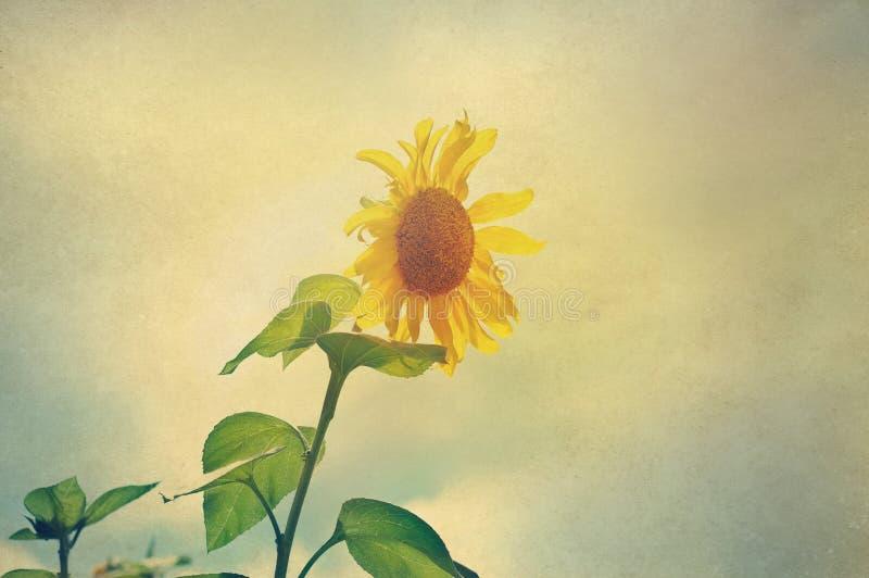 Abstrakcjonistyczni słoneczniki w świetle słonecznym na papierze groszkują obraz royalty free