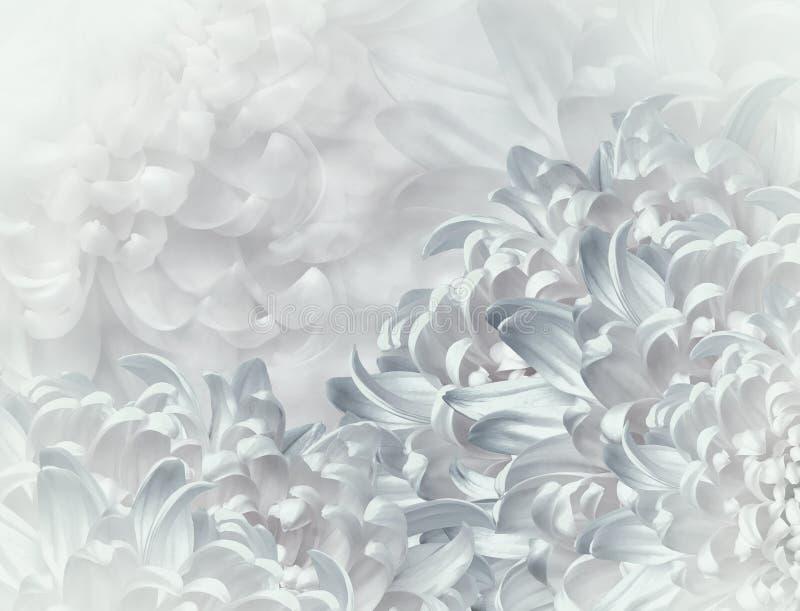 abstrakcjonistyczni t?a chryzantemy koloru kwiaty turkusu tło kwiecisty kola? t?a sk?adu powoju kwiatu tulipany bia?y Zako?czenie zdjęcie stock