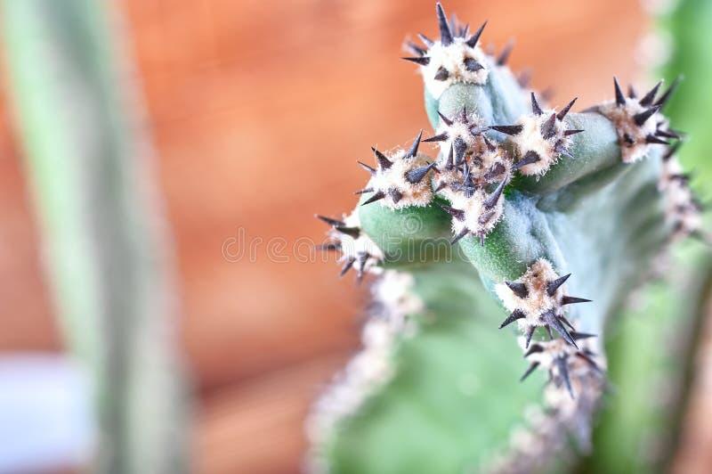 Abstrakcjonistyczni widoku kaktusa kręgosłupy Pojęcie samoobrona, niepłynność, obrona, trwałość, opór kosmos kopii fotografia stock
