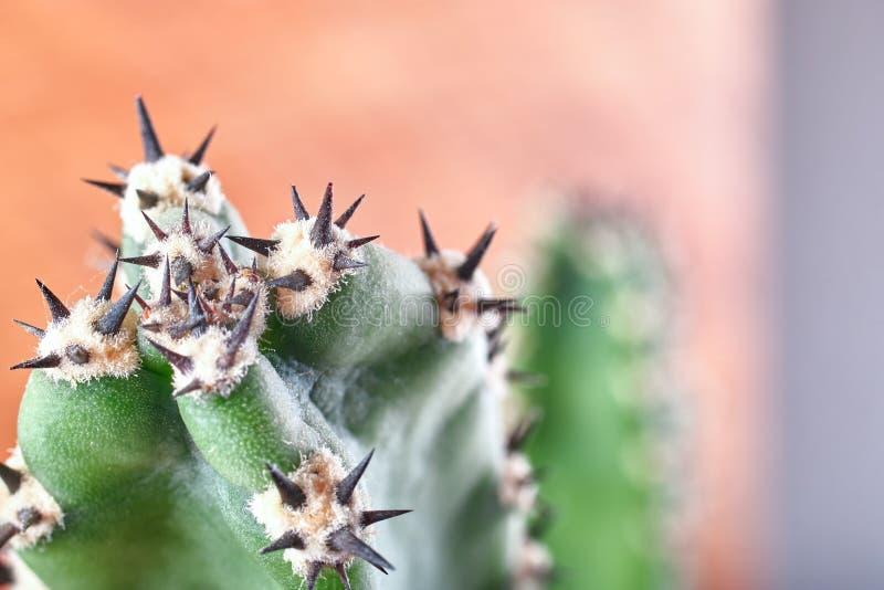 Abstrakcjonistyczni widoku kaktusa kręgosłupy Pojęcie samoobrona, opór kosmos kopii fotografia stock