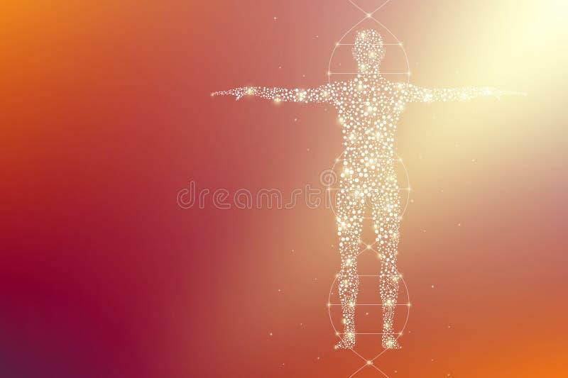 Abstrakcjonistyczny ciało ludzkie z molekuły DNA Medycyna, nauka i technika ilustracji