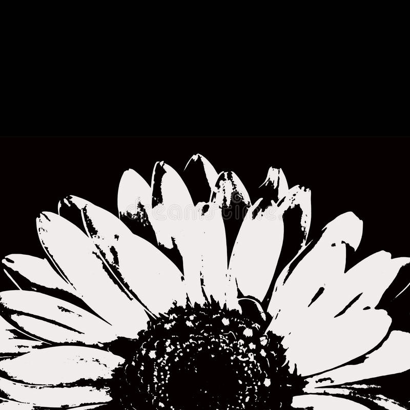 Abstrakcjonistyczny czarny i biały gerbera kwiat zdjęcie stock