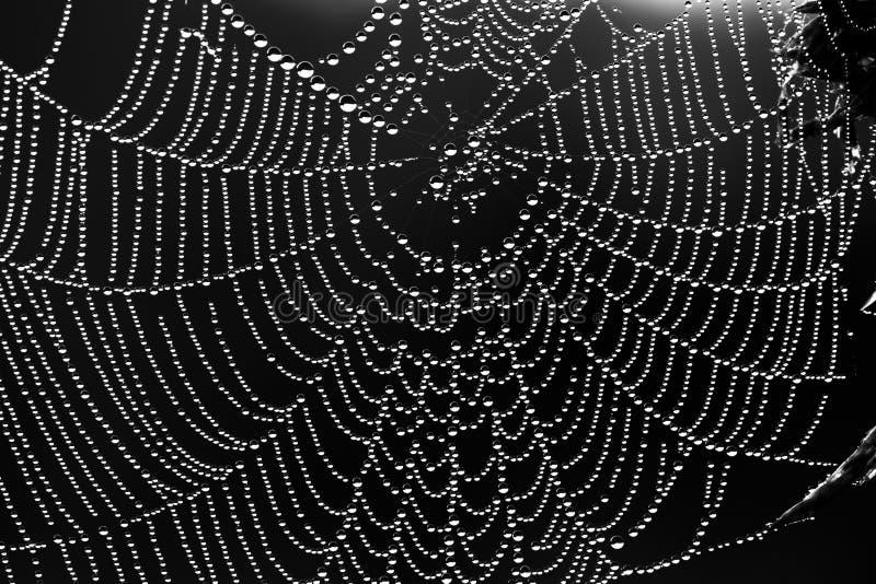 Abstrakcjonistyczny czarny i biały tło od sieci obraz stock