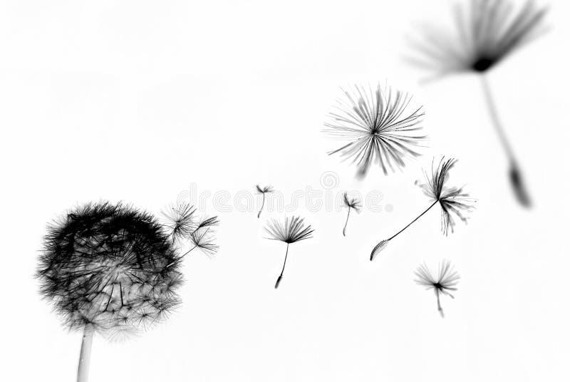 abstrakcjonistyczny dandelion zdjęcia royalty free