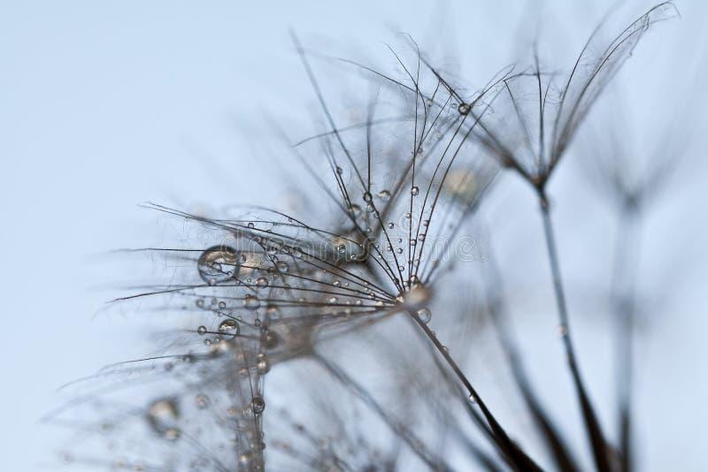 Abstrakcjonistyczny dandelion kwiatu tło, krańcowy zbliżenie. fotografia royalty free