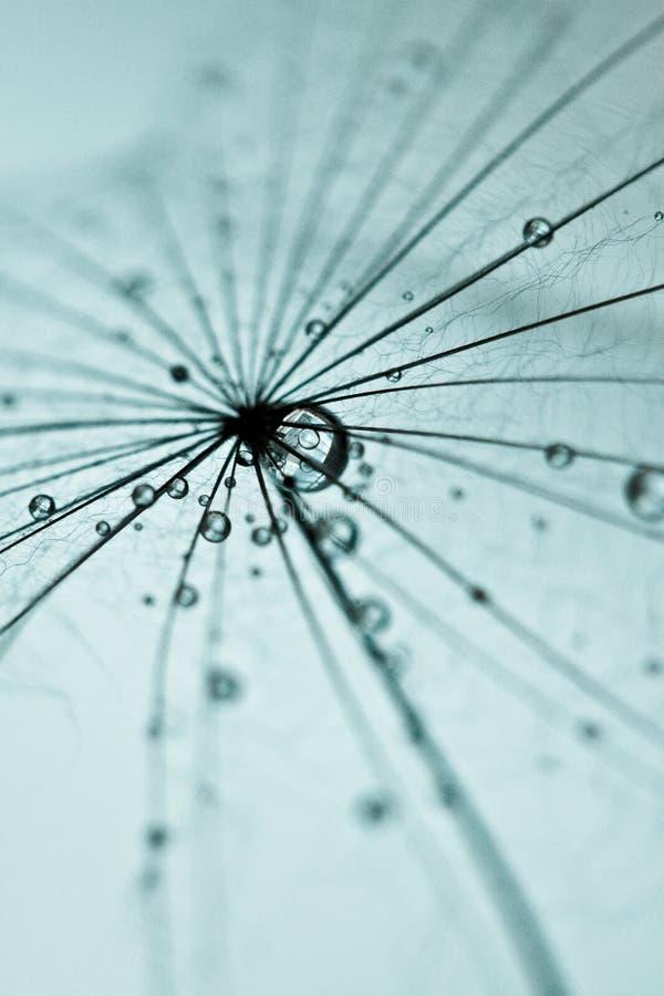 Abstrakcjonistyczny dandelion kwiatu tło, krańcowy zbliżenie. zdjęcie stock