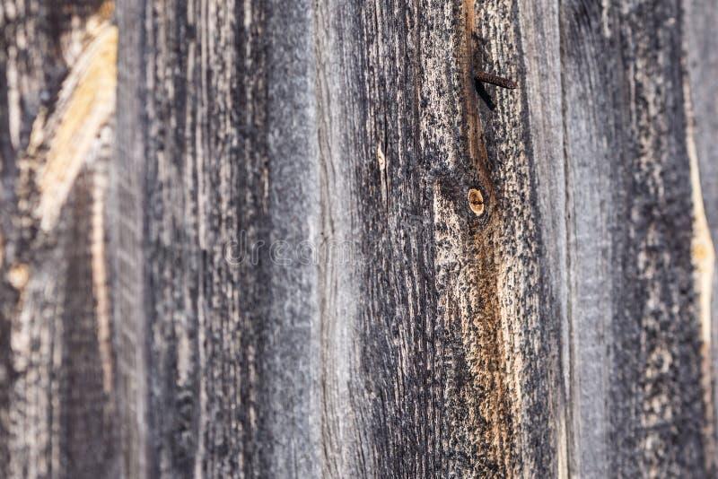 abstrakcjonistyczny drewniany tło z brązowić gwoździami fotografia royalty free
