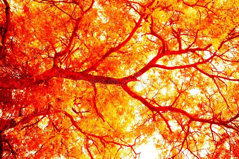 Abstrakcjonistyczny drzewo, Miękka ostrość, tło z różowym koloru filtra abstrakcjonistycznym drzewem, Miękka ostrość, tło z kolor zdjęcia royalty free
