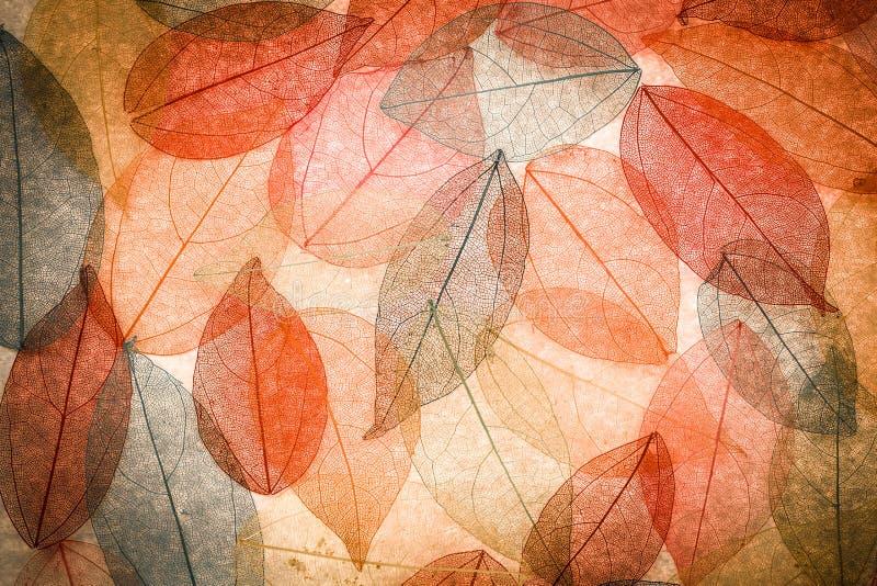 Abstrakcjonistyczny jesieni tło zdjęcie stock
