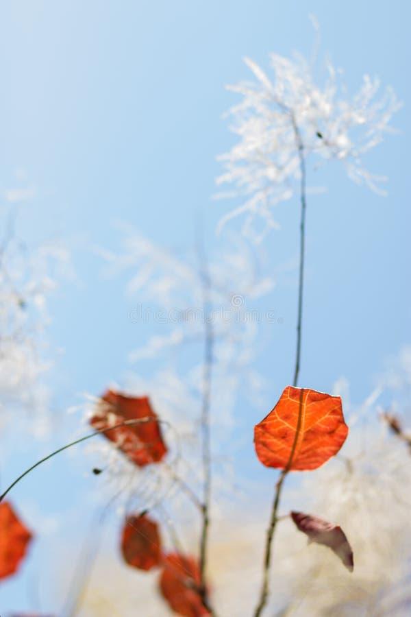 Abstrakcjonistyczny jesienny tło dowcipu ulistnienie obrazy royalty free